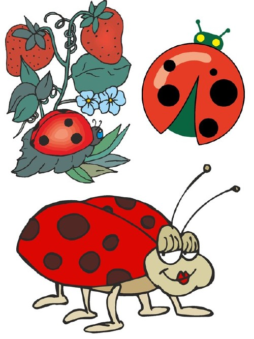 Ladybird (insect vector)
