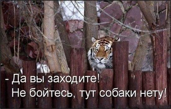 Веселые картинки!)