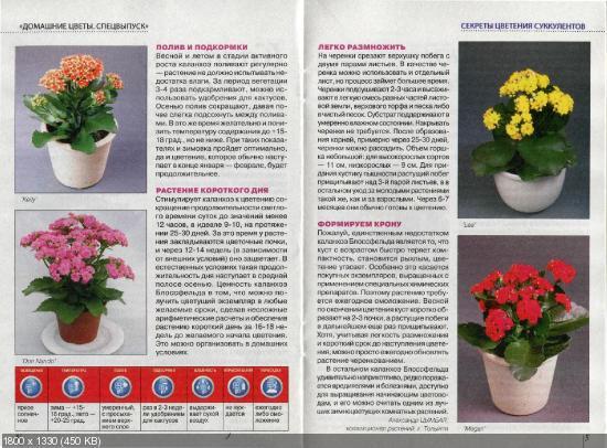 Домашние цветы. Спецвыпуск №1 (февраль 2016)