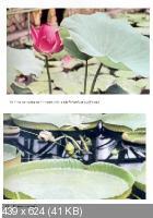 Ф.А. Новак - Иллюстрированная энциклопедия растений. 2 изд (1982)