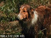 ����� ������������ ����� / Lassie Come Home (1943)