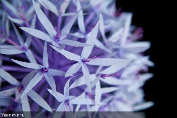 Цветы из гофрированой бумаги 3da94155499b2b16854430deb43da64a
